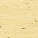 Product: T85007-Marantha Arrowroot
