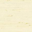 Product: T85008-Marantha Arrowroot