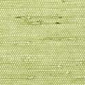 Product: T85012-Marantha Arrowroot