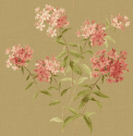 Product: HC90416-Garden Phlox
