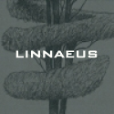 Collectie: Linnaeus